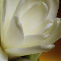 Eau de Parfum (Voir 2/4)