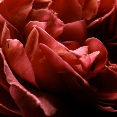 Rose Barbare - Eau de Parfum (Voir 2/4)